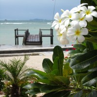 Thailand in the off-season is a beautiful place to be. Ko Phangan is rarely quiet or calm, but there was no one at our beach-resort on the north of the island and these beautiful orchids were in full bloom. It was the most leisurely time I've had in all of southeast Asia.